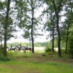 k-paarden
